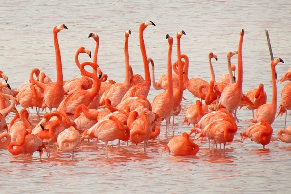 flamingos-in-celestun-estuary-flickr-treegrow-14FCA25A10-1187-4DD9-BA52-D96E8B0F5CA7.jpg